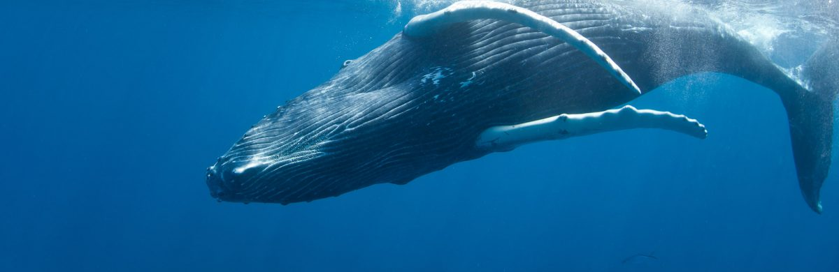 Why care about the impacts of underwater noise on marine life?