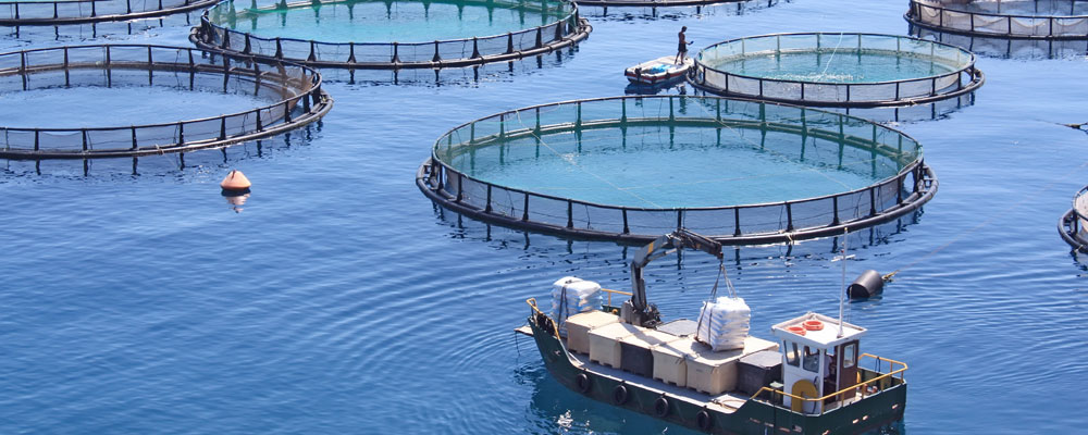 The secret to supporting sustainable marine aquaculture
